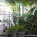 ブラジル:ベレン】安宿情報