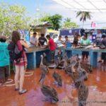 エクアドル:ガラパゴス諸島】知ってる?評判の魚市場はカオスだった!(サンタクルス島)