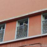 猫の国モロッコ写真集